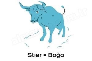 Almanca Boğa Burcu Stier